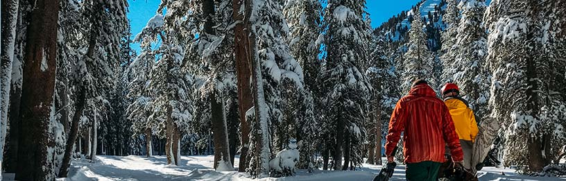 skiiers walking through snowy forest
