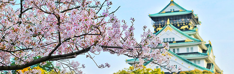 osaka-castle-cherry-blossoms