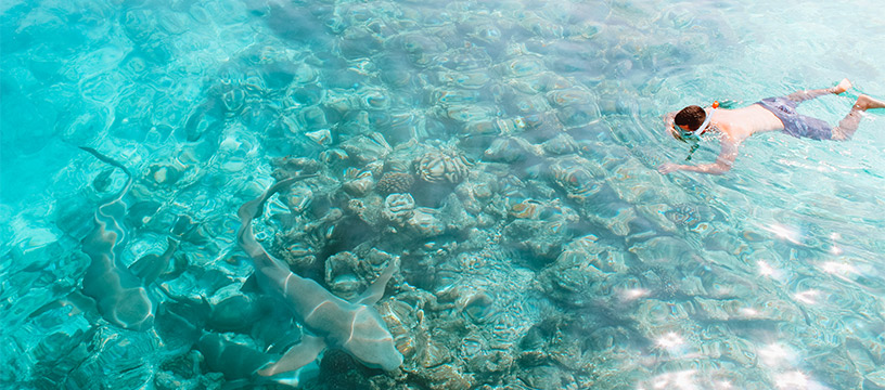 swimming-with-sea-creatures-maldives