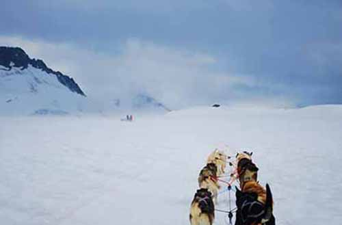 Trek through the cold terrain of Alaska with a team of tough huskies and their Iditarod mushers.