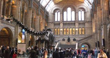 Museum with dinosaur bones